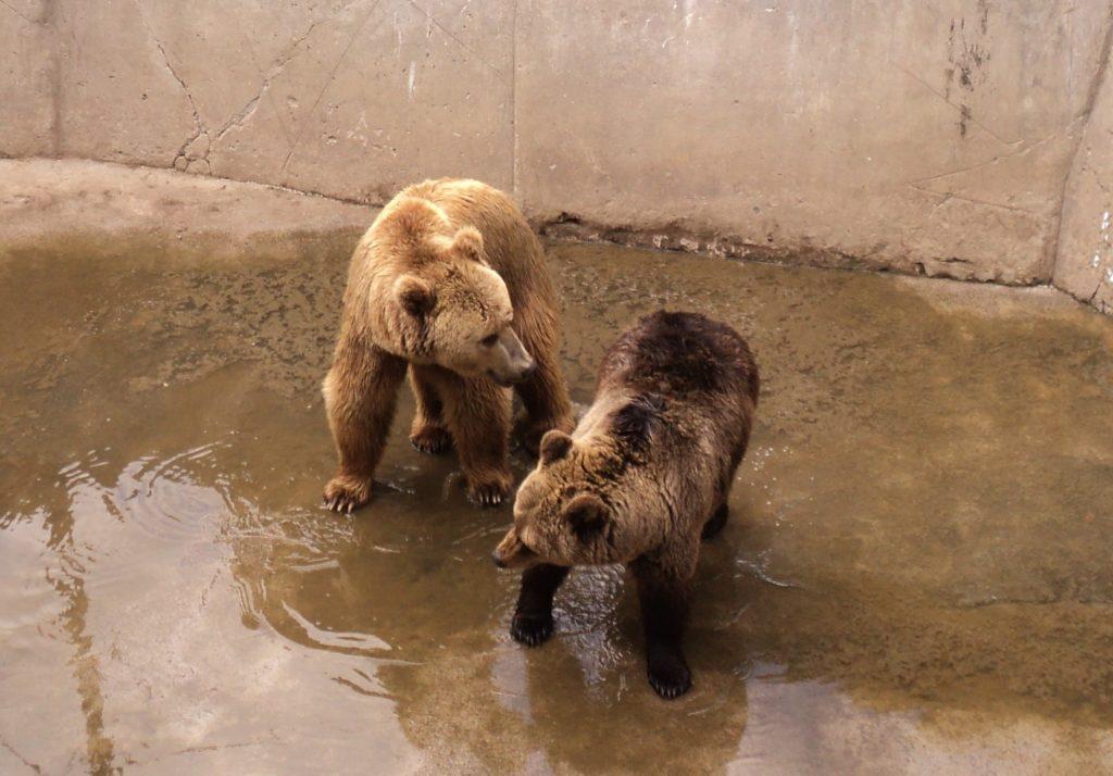 DSC03215 1024x714 - Лекцію з питань пенсійного забезпечення провели для працівників зоопарку